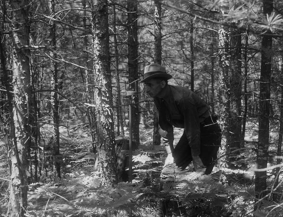 image of district ranger taking inventory in the forest 1920s