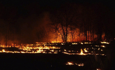 image of a controlled forest burn at night