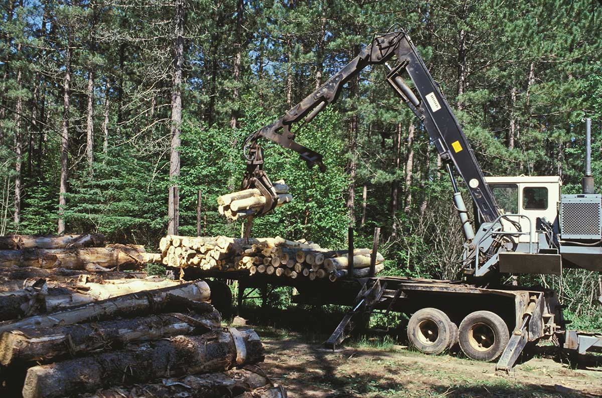 image of a scorpion model tree harvester stacking timber on trailer